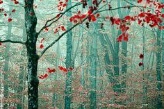 The Backup Singers - Decorative Fog Photography - Landscape - Red Fall Foliage - Autumn - Stowe, Vermont - Fairytale