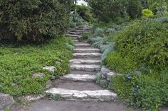 stairs in the Japanese Garden in Budapest, Hungary Central Europe, Summer Travel, Continents, Stairs, Budapest Hungary, Walkways, Outdoor Decor, Irish, Heaven