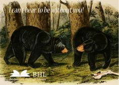 Give your sweetheart a biodiversity-inspired Valentine! Happy Valentine's Day from BHL!