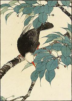 Imao Keinen Japanese Flowering Cherry, Black Bulbul 1891
