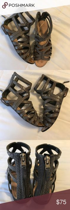 Brian Atwood Alcarra Gladiators .... Gladiators Alcarra by Brian Atwood great comfortable Sandal . Color and material: Gray snake skin upper leather with bronze trim . Heel also has bronze with black trim . Zip back with hardware by designer. (In good condition as seen in picture no damages just used sole but not worn completely. ) B Brian Atwood Shoes Sandals