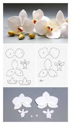 Pattern - Orchid - by Oton Franca Oliveira