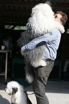 This makes me miss my old English sheepdog Theo :(