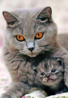 Mother cat and kitten #cat #cats #kitten #kittens #cute
