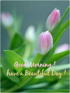 Wish you a very beautiful Day Good Morning Snoopy, Good Morning Thursday, Good Morning Cards, Morning Morning, Good Morning Flowers, Good Morning Good Night, Good Morning Wishes, Morning Texts, Happy Morning
