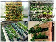 Dicas para reutilizar paletes-jardim