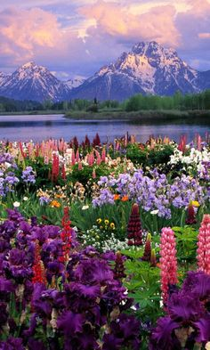 Flowers, Landscape, Mountains, Plants.