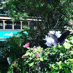 Good morning #butterfly #garden #lovefl #visitpasco