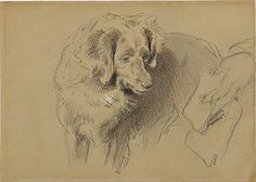 Sir Edwin Henry Landseer (British, 1802–1873) | Study of a Dog | 1820–73 | The Metropolitan Museum of Art, New York | Bequest of Mary Cushing Fosburgh, 1978 (1979.135.9) #dogs