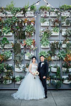 Succulents, edison bulbs, plant wall // Bluecat Photography