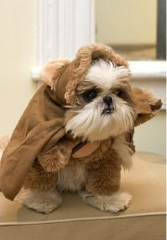 Does anyone else get the image of Star Wars Ewoks in their head?