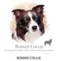 """#perro #dog #mascotas #animales #camisetas Para los que son amantes de los animales y en especial de los perros, esta camiseta es la tuya. Una camiseta con la cara de tu perro favorito.  En Theanimallshop podrás comprar On Line la camiseta de tu perro. Tenemos una gran variedad.  Entra y elige con un solo """"click"""" tú camiseta.http://www.tiendaonlineparaanimales.com/tienda-de-mascotas-barata/nuestras-camisetas.html"""