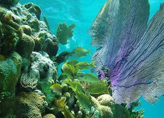 A Beach & Snorkel Tour Day Trip to Culebra Island, Puerto Rico. Departing from Fajardo, Puerto Rico, go snorkeling Culebra's beaches where sea turtles roam.