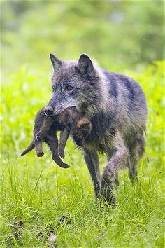 """""""Baby animals"""" YOU ARE INVITED TO READ AN INTERESTING ARTICLE ABOUT THIS TOPIC IN THE FOLLOWING LINK: http://wol.jw.org/en/wol/d/r1/lp-e/102001045 - jw.org/en  """"Crías de animales"""" LEA UN INTERESANTE ARTÍCULO SOBRE ESTE TEMA EN EL SIGUIENTE ENLACE: http://wol.jw.org/es/wol/d/r4/lp-s/102001045 - jw.org/es"""