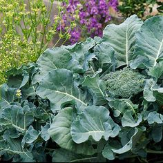 Grow these cool-season vegetables and herbs to extend your garden's harvests in spring and fall. This list of vegetables includes seasonal vegetables, green vegetables, non-starchy vegetables, winter vegetables, green leafy vegetables, fall vegetables and more.