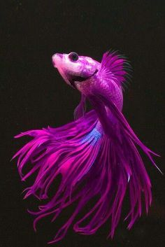 6. Nature -- Fish The purple & blue colors of the Beta fish would be a beautiful color combination to re-create with make-up.