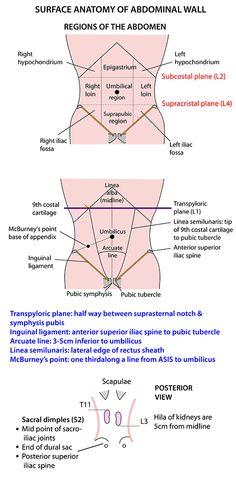 Instant Anatomy - Abdomen - Surface - Abdominal wall