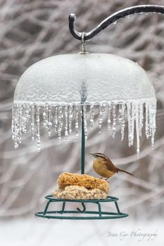 For The Birds - Idea/glass bowl/lamp shade with crystals/Christmas glass/plastic icicles hanging from it.