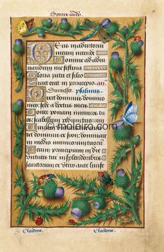 Thistle, f. 77r, Gre