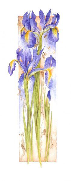 Iris II ~ Jan Harbon