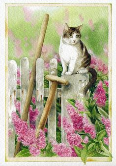 cat by Marjolein Bastin by ichabodhides, via Flickr ---- (the pin via Kim Larson)