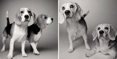 Amanda Jones – Dog Years - Sydney and savannah: 16 months and 5 months; 10 years and 9 years. Amanda Jones, Cute Puppies, Cute Dogs, Savannah, Dog Ages, Dog Years, Old Dogs, Dog Show, Photography Projects