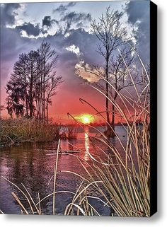 Winter sunset through the marsh grass, Pawleys Island, South Carolina amazing Photography All Nature, Amazing Nature, Beautiful World, Beautiful Places, Pawleys Island, Winter Sunset, Beautiful Sunrise, Belle Photo, Pretty Pictures