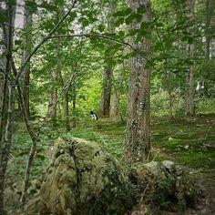 En medio del bosque.