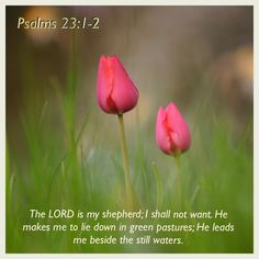 Psalm 23:1-2 Scripture Quotes, Faith Quotes, Bible Verses, Prayer For My Family, He Is Lord, Angel Prayers, Daily Wisdom, Lord Is My Shepherd, Biblical Inspiration