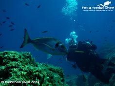 #immersioni #diving #scuba #scubadiving #subacquea #fotosub www.imascubadiver.com