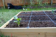 Cheap and Easy Square Foot Garden Grid