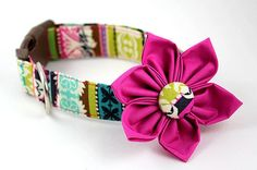 Dress your dog in style w/a custom collar.