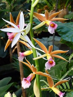 List of the Best Types of Orchids Types Of Orchids, Beautiful Flowers, Love Flowers, Wild Orchid, Floral Photography, Tropical Garden, Horticulture, Shades Of Green, Planting Flowers
