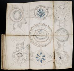 A Spanish publisher plans to release replicas of the Voynich Manuscript, a book…
