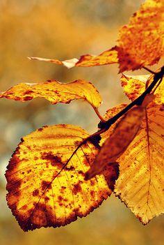 Autumn Leaves Rustic Fall Photography Decor Harvest Earth