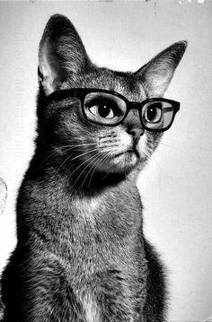 Rr Grayson borrow my glasses