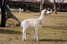 Kuzu Heykelleri Beton Animals, Animales, Animaux, Animal, Animais