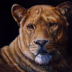 Her Majesty - lioness oil painting, painting by artist Anne Zoutsos Big Cats Art, Cat Art, Paintings For Sale, Original Paintings, Lion Painting, Lion Art, Animal Totems, Realism Art, Wildlife Art