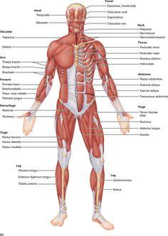 Female Human Body Diagram Of Organs Human Body Inner Diagram Anatomy
