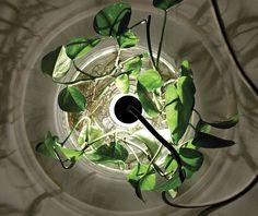 'Vase & Leuchte'