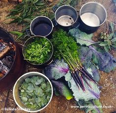 Emma Bowen from Milkweed, Australia talks to Belinda Sheekey about the wide range of plants you can grow for dyeing. From turmeric and red cabbage to onion skins and pomegranates.