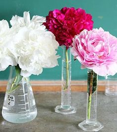 Pretty peonies arranged in chemistry flasks for a quirky gardening idea.