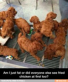 Thought its was fried chicken til I read it... I'd better go to bed