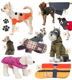 10 Great Dog Coats + DIY Projects | Design*Sponge
