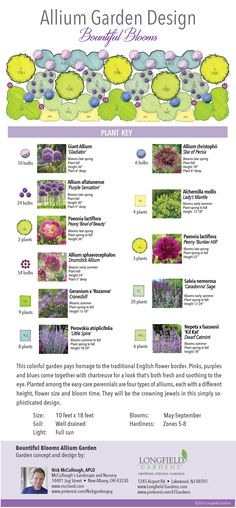 Bountiful Blooms, a jeweled tone perennial border highlighting the spherical, fluffy heads of alliums from Longfield Gardens and Thinking Outside the Boxwood. Bountiful Blooms, a jeweled t Garden Bulbs, Garden Plants, Flowers Garden, Patio Plants, Garden Trees, Shade Garden, Diy Gardening, Gardening Supplies, Vegetable Gardening