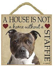 Uplifting So You Want A American Pit Bull Terrier Ideas. Fabulous So You Want A American Pit Bull Terrier Ideas. English Staffordshire Bull Terrier, American Staffordshire, Staffy Dog, Pitbulls, Nanny Dog, Bull Terrier Dog, Terrier Mix, Dogs And Puppies, Doggies