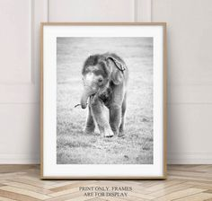 14 Best Elephant Photography Prints Images In 2020 Elephant Photography Photography Print Prints