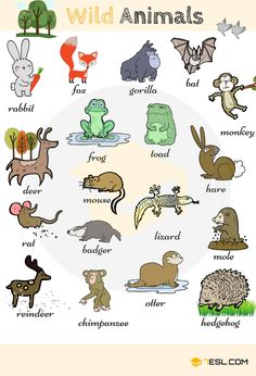 30shares Everybody loves animals – keeping them as pets, seeing them at the zoo or visiting a farm… List of Animals. Learn …