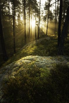 Enchanted backlight, Tiveden, Sweden. Photo Johan Karlsson