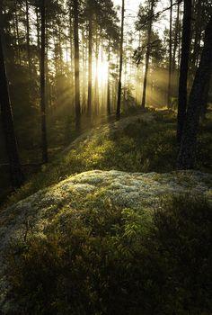 Enchanted backlight, Tiveden, Sweden. Photo Johan Karlsson